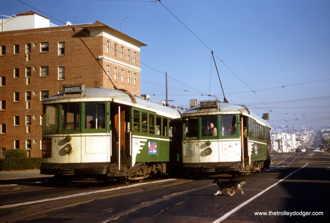 SF Muni 77 turn back meets 130 on Geary Boulevard in 1956. Hope that dog made it across the street safely. (Clark Frazier Photo)