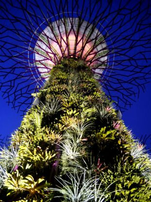 Supertree at Gardens by the Bay at night