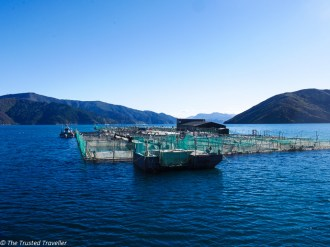 Cruising Marlborough Sounds on a Mail Boat - The Trusted Traveller