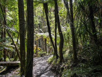 Walking through the rainforest on the Truman Tracki - Driving New Zealand's Wild West Coast - Things to See & Do - The Trusted Traveller
