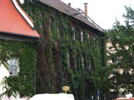 Vine covered building, Krakow