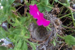 Nest_flower