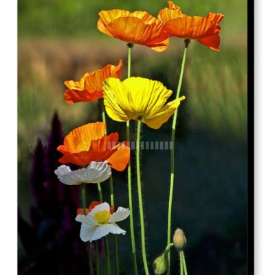 Early Summer Sun - Photograph on Canvas