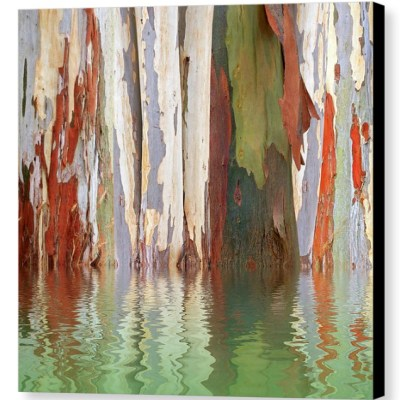 Eucalyptus Tree Bark Reflections - Photograph on Canvas