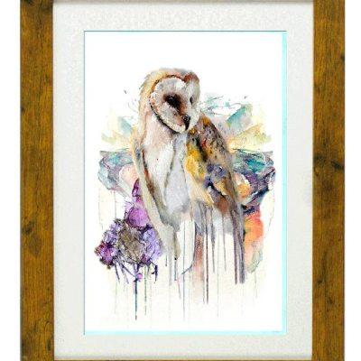 Strigi Formes Owl