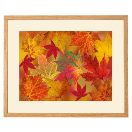 Dazzling Autumn Leaves