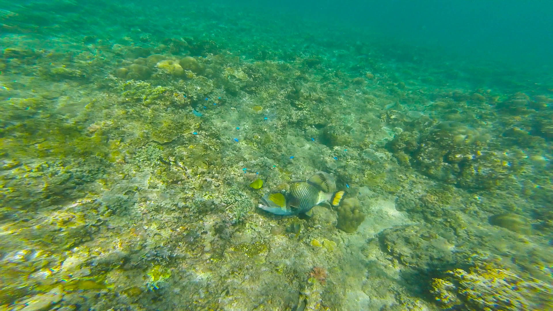 My First Time Snorkeling