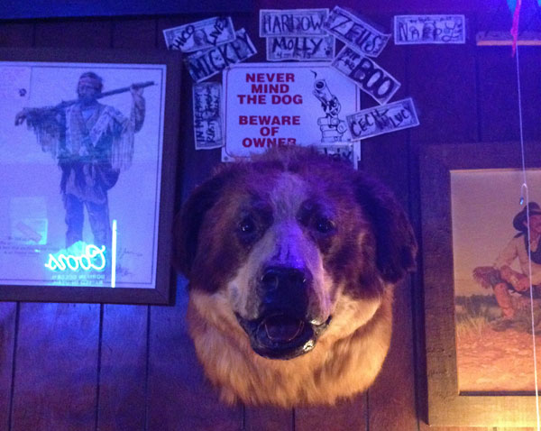 Mounted St. Bernard head at Shooting Star Saloon - Utah's oldest bar.