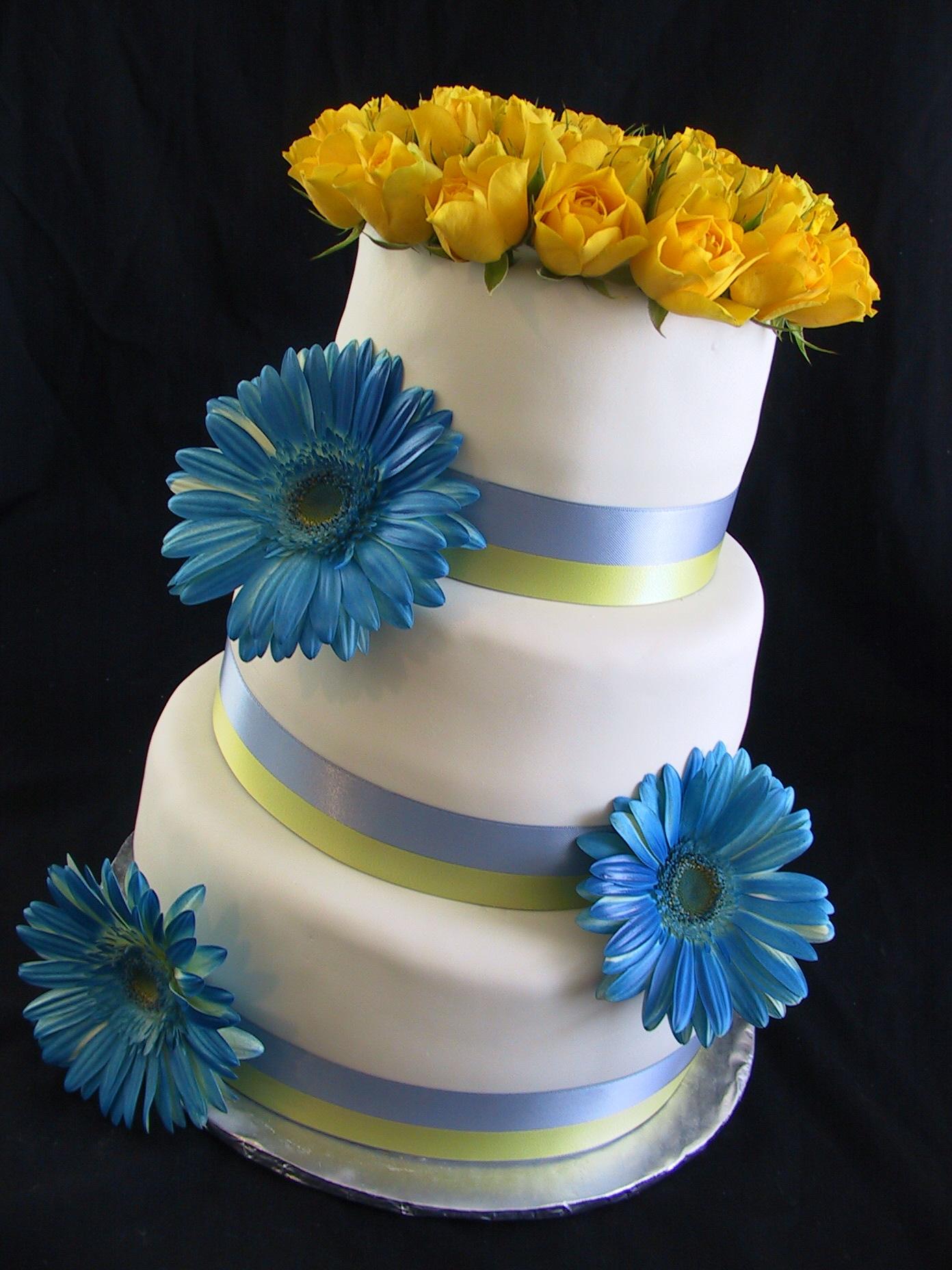 blue gerber daisy angle