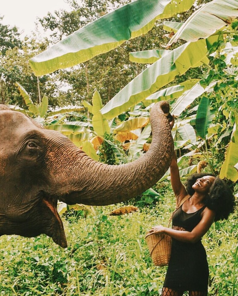 My Elephant Experience in Chiang Mai, Thailand