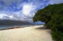 "The mesmerizing ""Mantigue Island"""