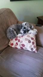 My dog, Humphrey