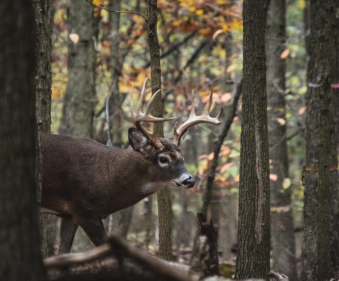 Tips & tricks for hunting big mountain bucks