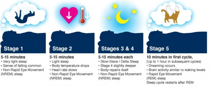 Stages-of-Sleep