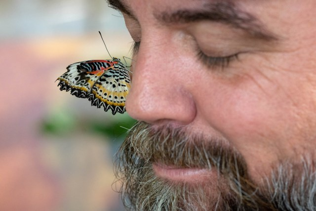 Close Encounters with Butterflies at the Smithsonian