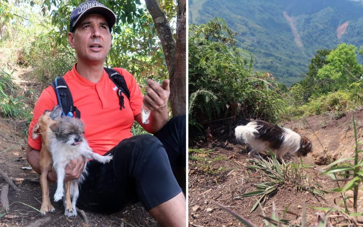 dogs that did the Cerro Tusa hike