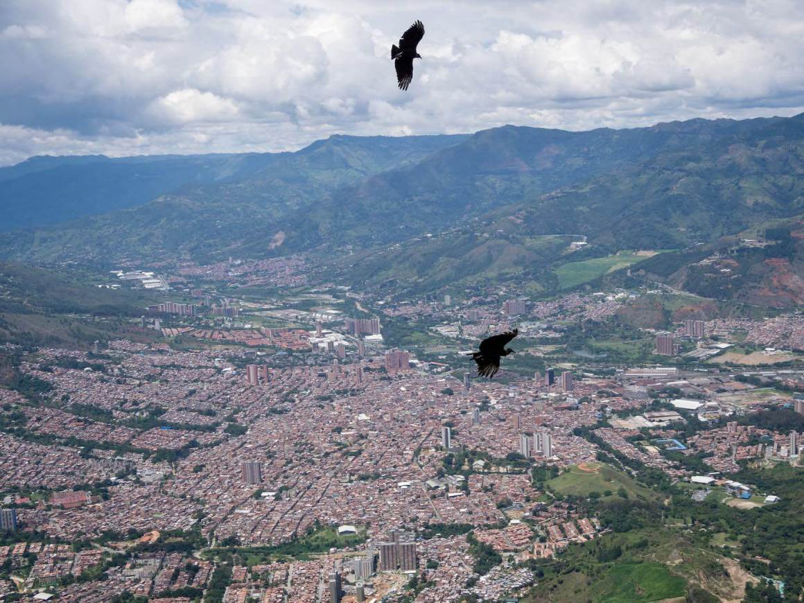 Birds flying high above the city.
