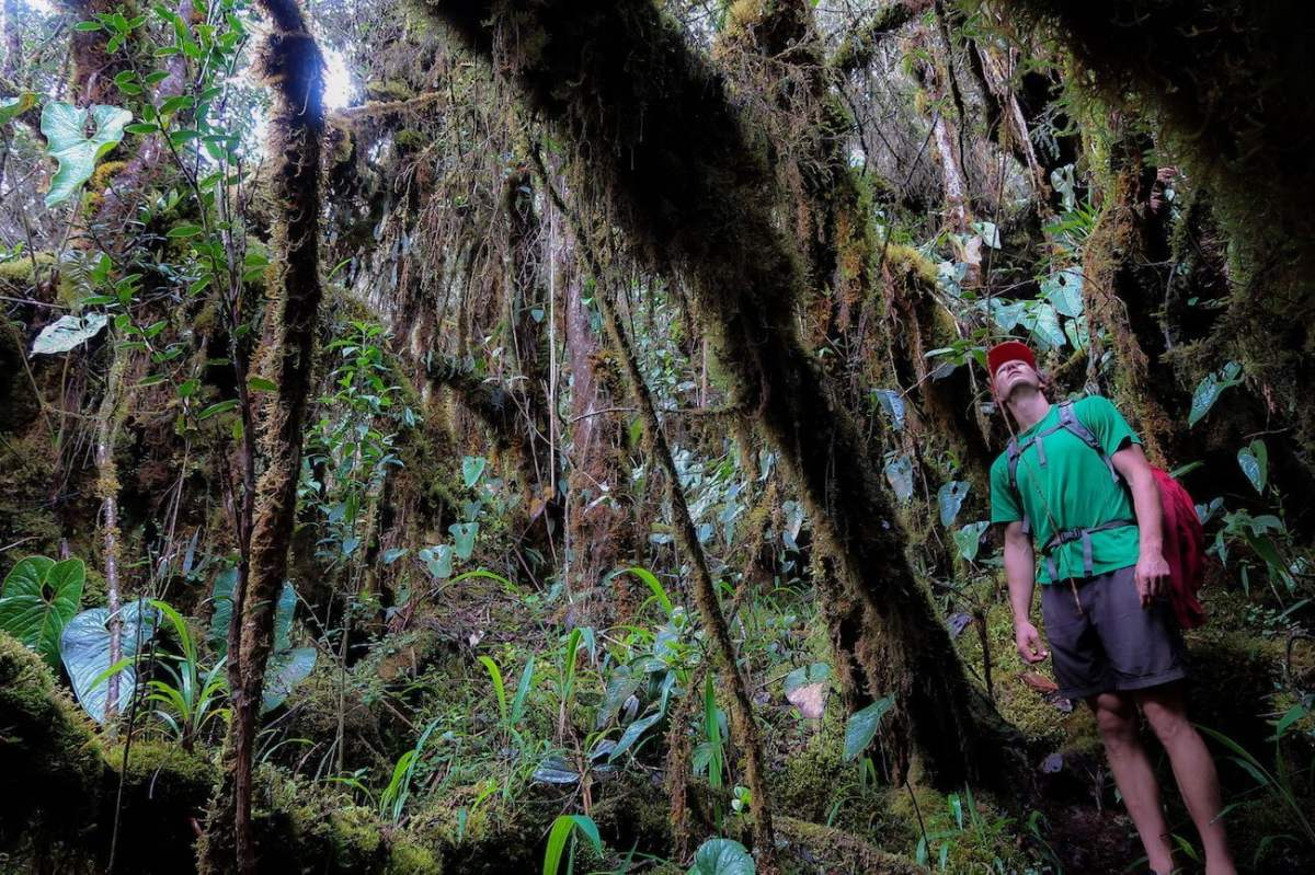 Chris amongst the overgrown forest below the Paramo del Sol in Colombia