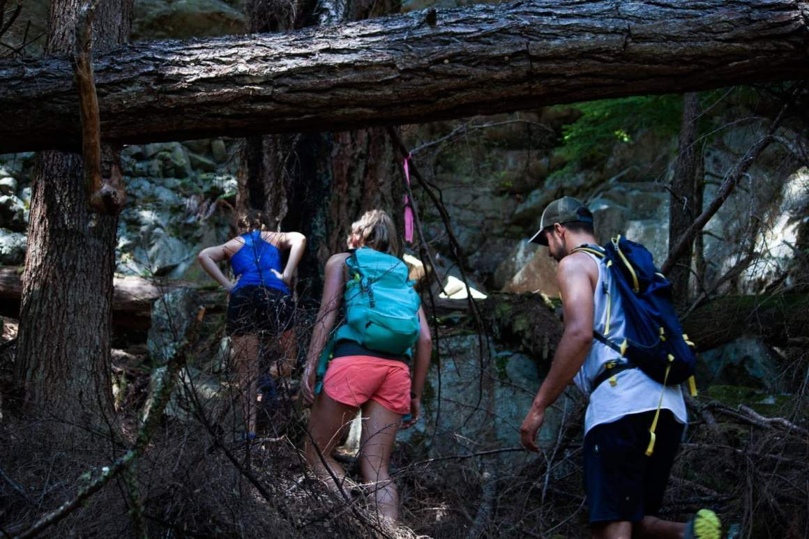 group following pink tape to the peak of anvil island