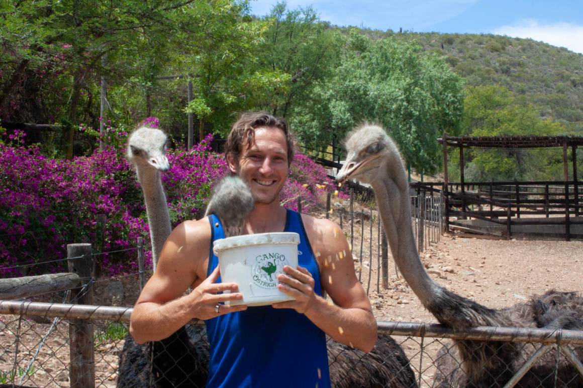 Ostriches eating over Chris' shoulders.