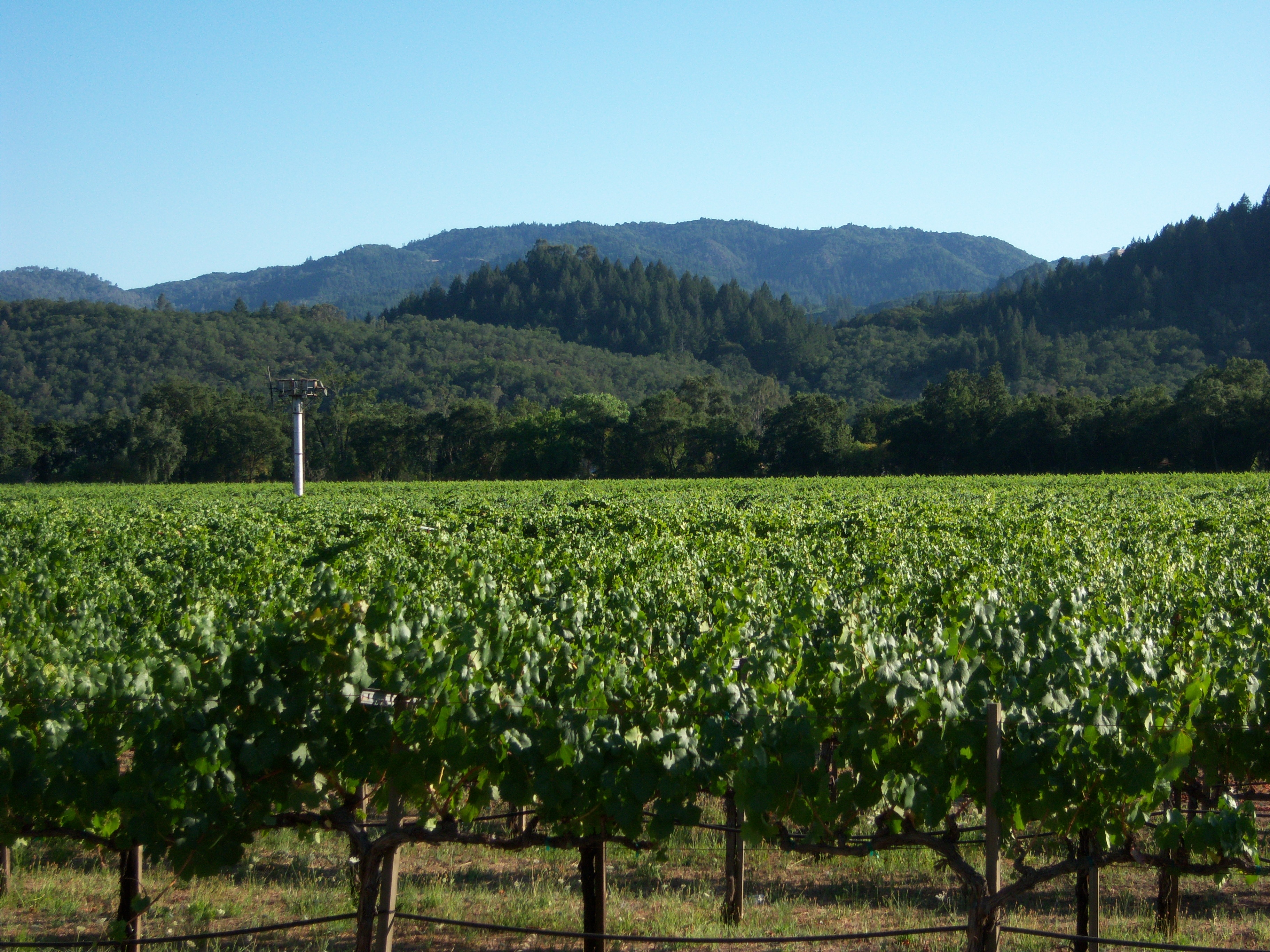 A nice backdrop for a wine tasting event.