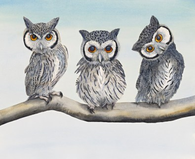 White Faced Scops Owls II sm