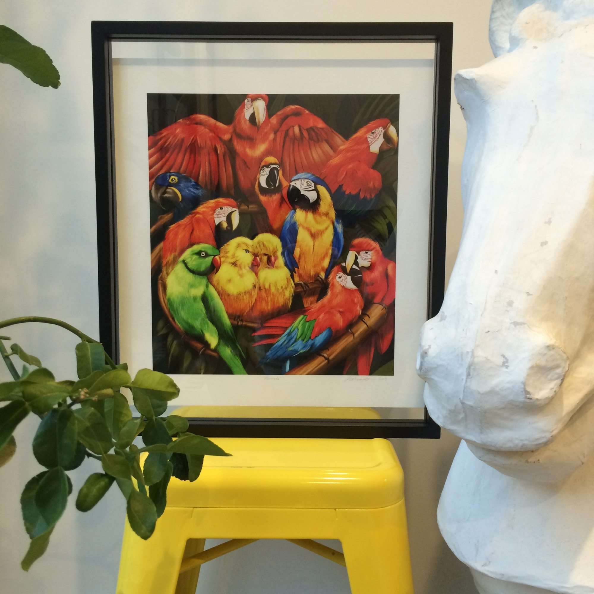 Kelly Thompson Parrot Print in a floating frame