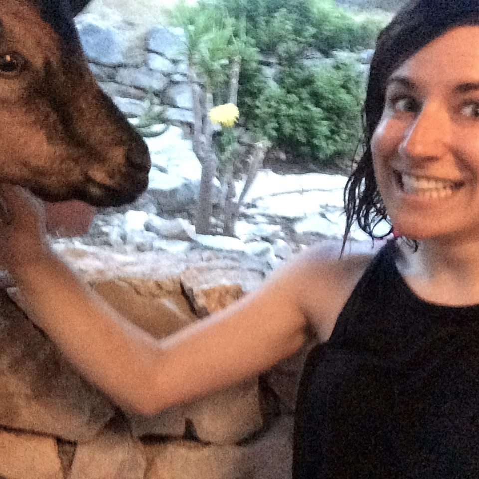 MedSailors Sismis Goat Croatia