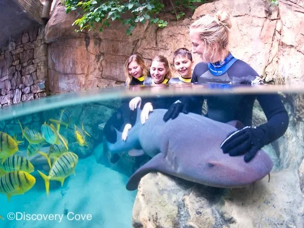 New Discovery Cove Experiences