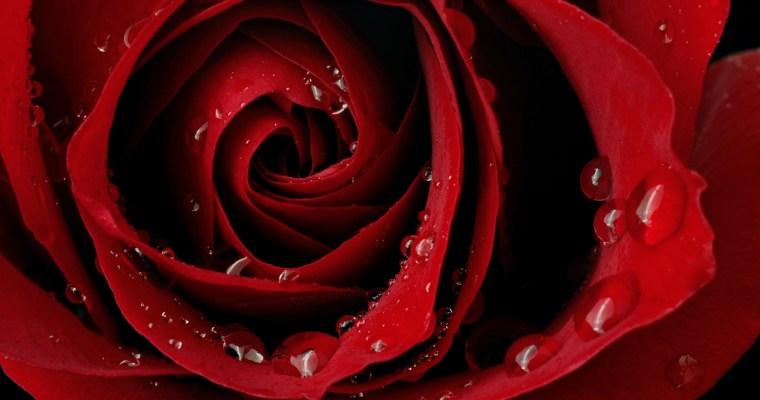 A Peek at Rose