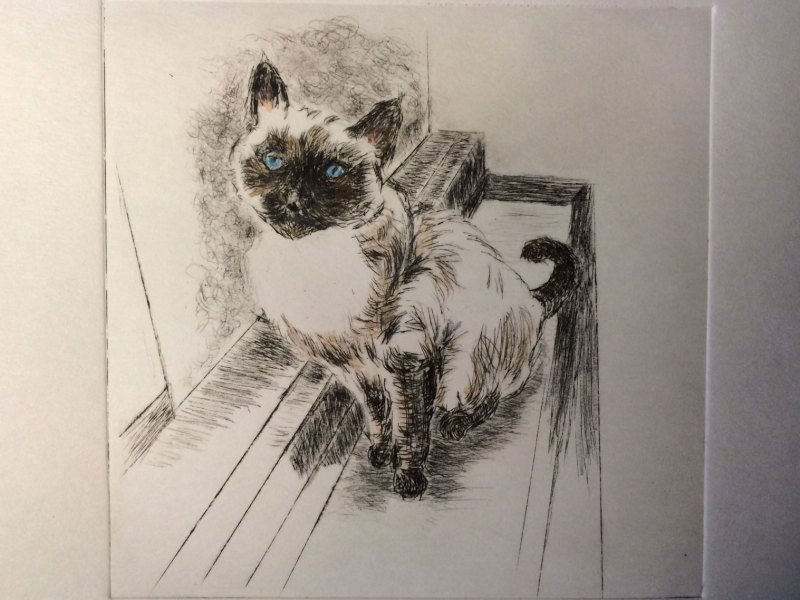"""""""The Quintessential Lily Cat,"""" a drypoint etching by L.S. King. © 2016. L.S. King"""