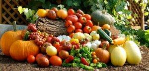 home-food-garden-md5ee5d1