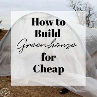How to build a greenhouse for cheap that is still sturdy
