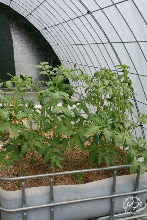 grow food anywhere with aquaponics