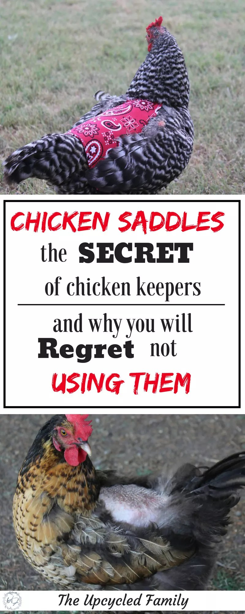 chicken saddle apron
