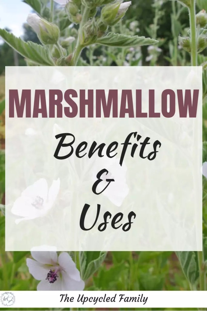 Marshmallow benefits & uses