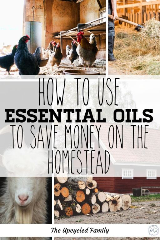 5 Reasons essential oils on the homestead are essential! Save time, money, resources and stress with a few essential oils on hand. With answers for just about anything, a homestead could throw at you. From pest control to bug-bite relief. Looking to heal farm animals of infections, ailments, injuries, age-related issues then essential oils have got your back! #essentailoils #essentialoilsforanimals #essentailoilsforfarmanimals