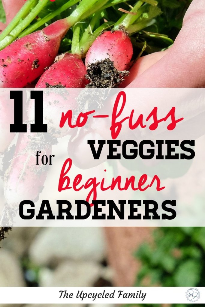 Looking for easy to grow vegetables for the beginner gardener? These 11 no-fusss veggies are the perfect beginner gardener collection. #easytogrowvegetables #easytogrowveggies #forbeginners #garden #easygrowveggies #easygardening #beginninggardening #spring #gardening
