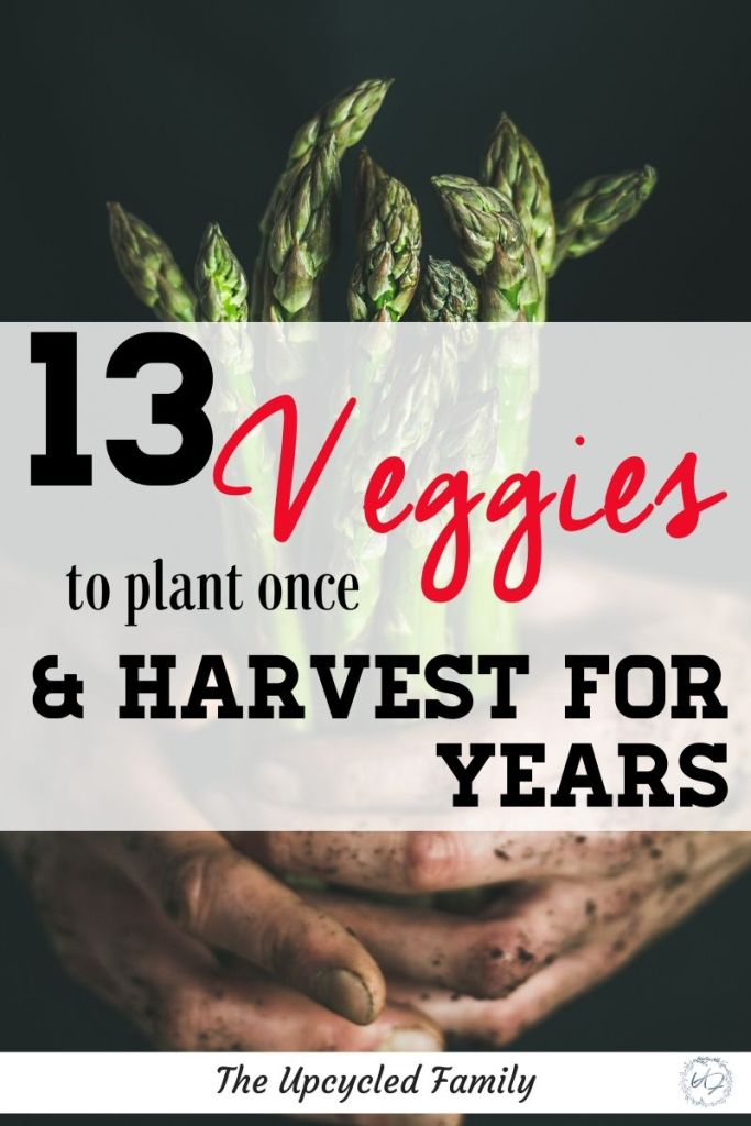 Are your new to gardening or looking for a way to maximize your garden yields without maximizing your time in the garden? Consider a perennial garden! 13 of the Best veggies (and a few herbs) to plant once and harvest for years and years to come. #perennialgarden #vegetables #perennialgardenideas #perennialgardenherbs #lowmaintenance #ideas #easy #edible #permaculturegarden #foodforestgarden