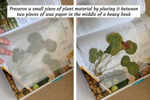 preserving plant material for study pages