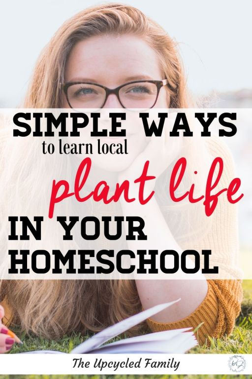 simple ways to learn local plant life in your homeschool