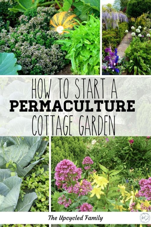 permaculture cottage garden