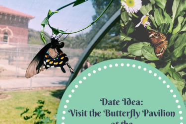 dates, things to do, dates in los angeles, fun dates, LA, DTLA, downtown los angeles, natural history museum, butterfly pavilion, casual dates, date ideas