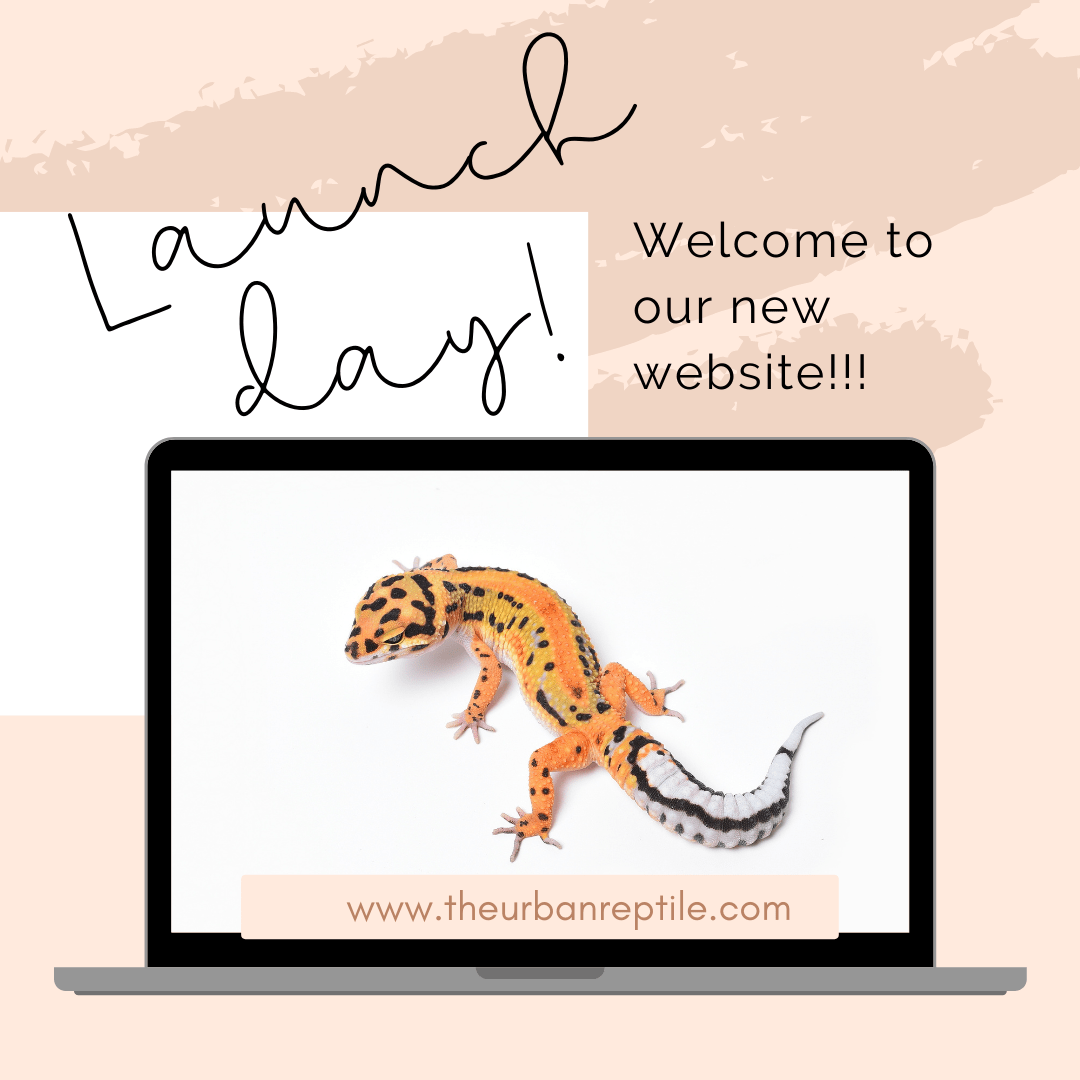 Welcome to our new website!!!