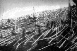 Fallen trees. Photo credit: Wikimedia commons