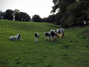 Offa's Dyke Path and Chirk Castle Countryside, North Wales   The Urban Wanderer   Sarah Irving