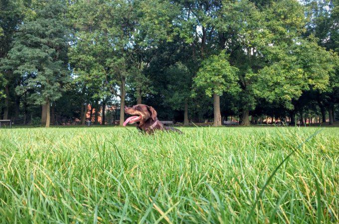 Borrow my Doggy, Whitworth Park, Bridgewater Canal and Ball Throwing