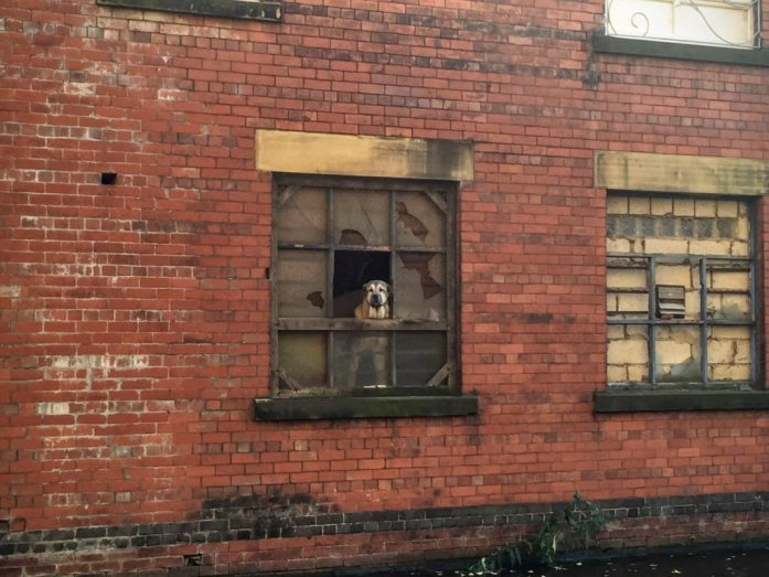 Walk and Picnic down the Ashton Canal | Manchester | OUtdoor Blogger | Sarah Irving | The Urban Wanderer | Get Outside