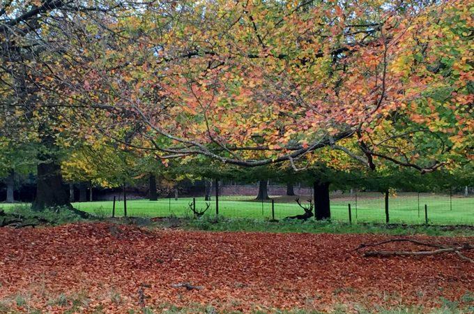 Autumnal wander at Tatton Park