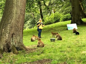 Trentham Monkey Forest | Days out from Manchester | Under 2 hours from Manchester | The Urban Wanderer | Sarah Irving | UK | Outdoor Blogger | Travel Blogger | Manchester Blogger